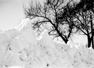 12 Ways to Survive a Blizzard