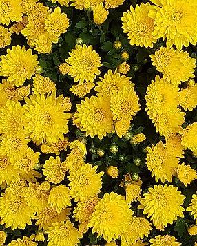 autumn-1739783_640.jpg