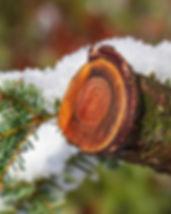 wood-3873260_640.jpg