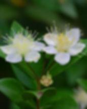 flower-1291003_640.jpg