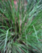 licorice-67608_640.jpg