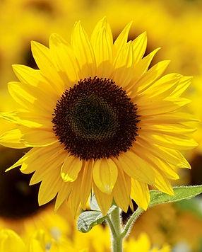 beautiful-bloom-blooming-1169084.jpg