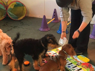 Latest Paws Puppy Playgroup Videos