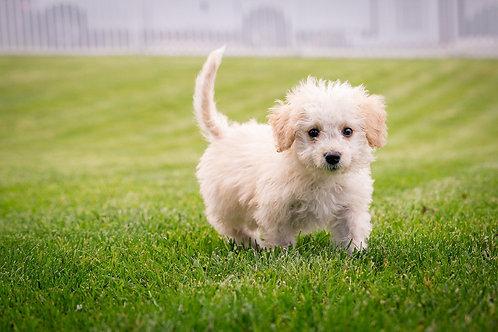 Top Three Puppy Problems Webinar