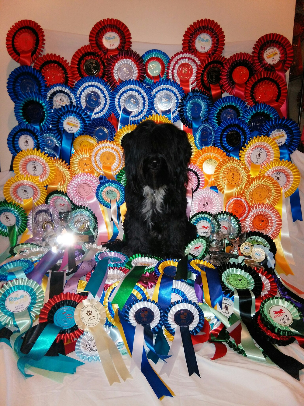 2015 Rosettes and Trophies