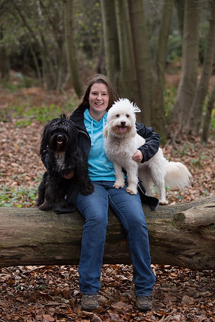 paws-itivity, dog walking, dog training, pet sitting , horsham, sussex, agility, puppy training, puppy sitting, puppy help