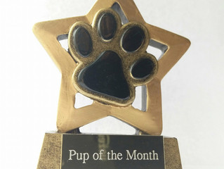 Will your pup win Pup of the Month?