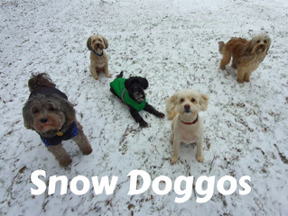 Snow dogs this morning