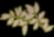 Ornament-2-L.png