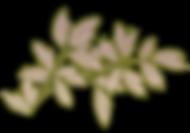 Ornament-2-R.png