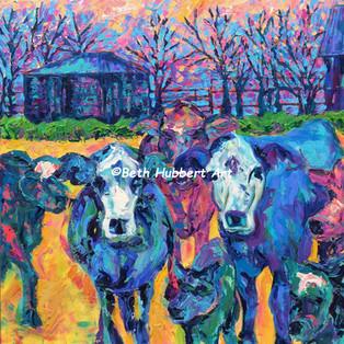 Cow Friends