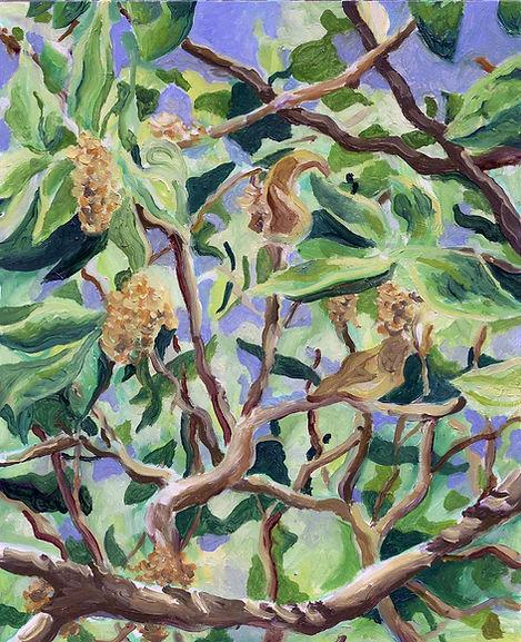 Oak Tree Leaves and Catkins.jpg
