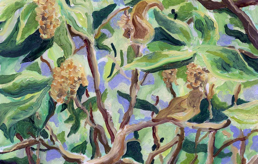 Second Place - Oak Tree Leaves and Catkins
