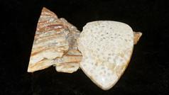 Broken Heart Petrified Palm Wood