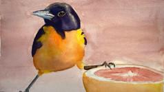 Bird with Grapefruit