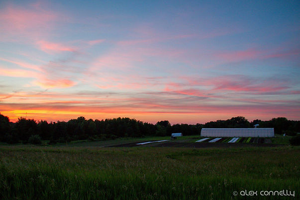Sunset - Vitruvian.jpg