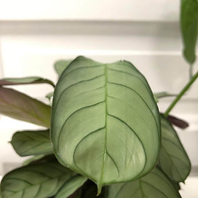 plant 6.jpg