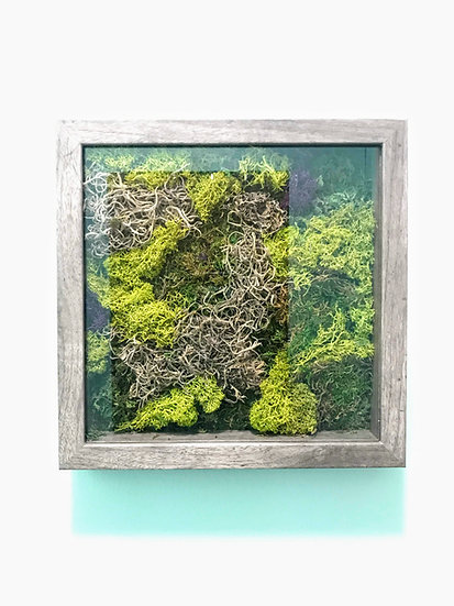 "Moss Shadow Box, 10"" x 10"""