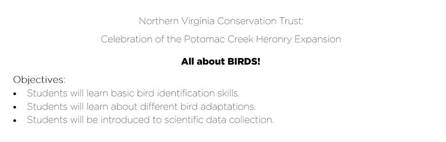 Birds!.png