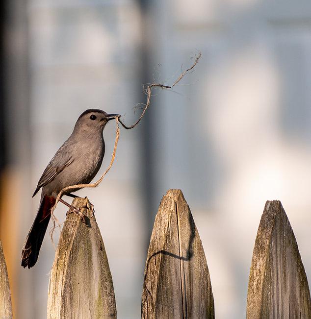 annualreportbird.jpg
