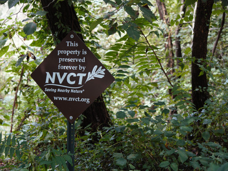 NVCT & Partners Remove Harmful Invasive Plants from Little Hunting Creek Preserve in Fairfax County