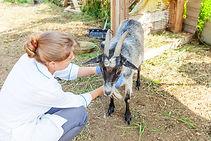 Veterinary Science.jpg