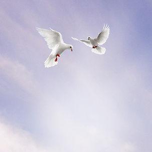 colombe + cielo per sfondo.jpg