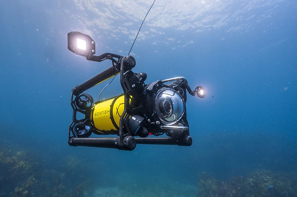 Boxfish ROV at marine reserve.jpg