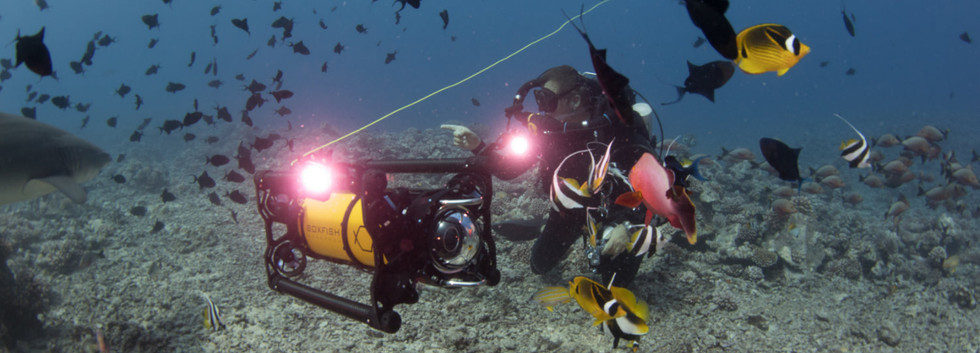 ROV diver fish.jpg