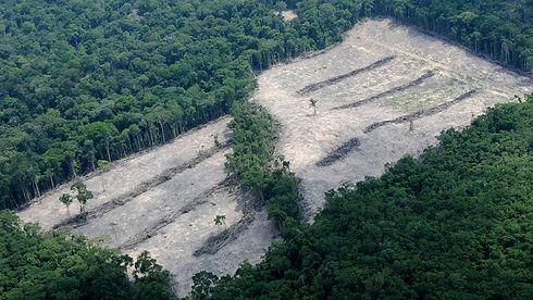 Regenwald-Abholzung-in-Brasilien-Mehr-al
