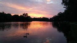 ducks silhouette sunrise.jpg