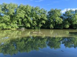 riverheron.jpg