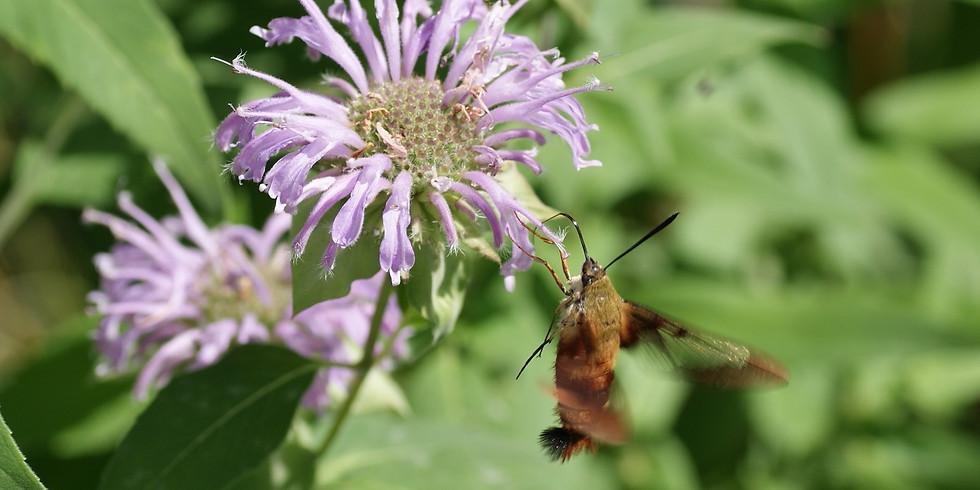 Darkside: Illuminating the World of Moths