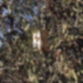 Birdbox2.jpg
