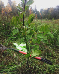 2016/17 Dance Nature Sanctuary Tree Planting Events