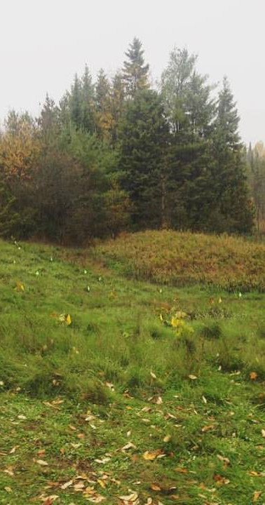 Area where we planted 100 samplings of W