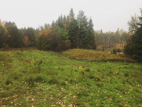 2016/2017Dance Nature Sanctuary Tree Planting Events