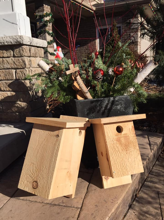 Flying Squirrel & Bluebird Box