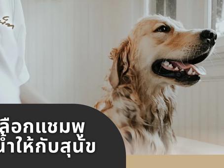 การเลือกแชมพูอาบน้ำให้กับสุนัข