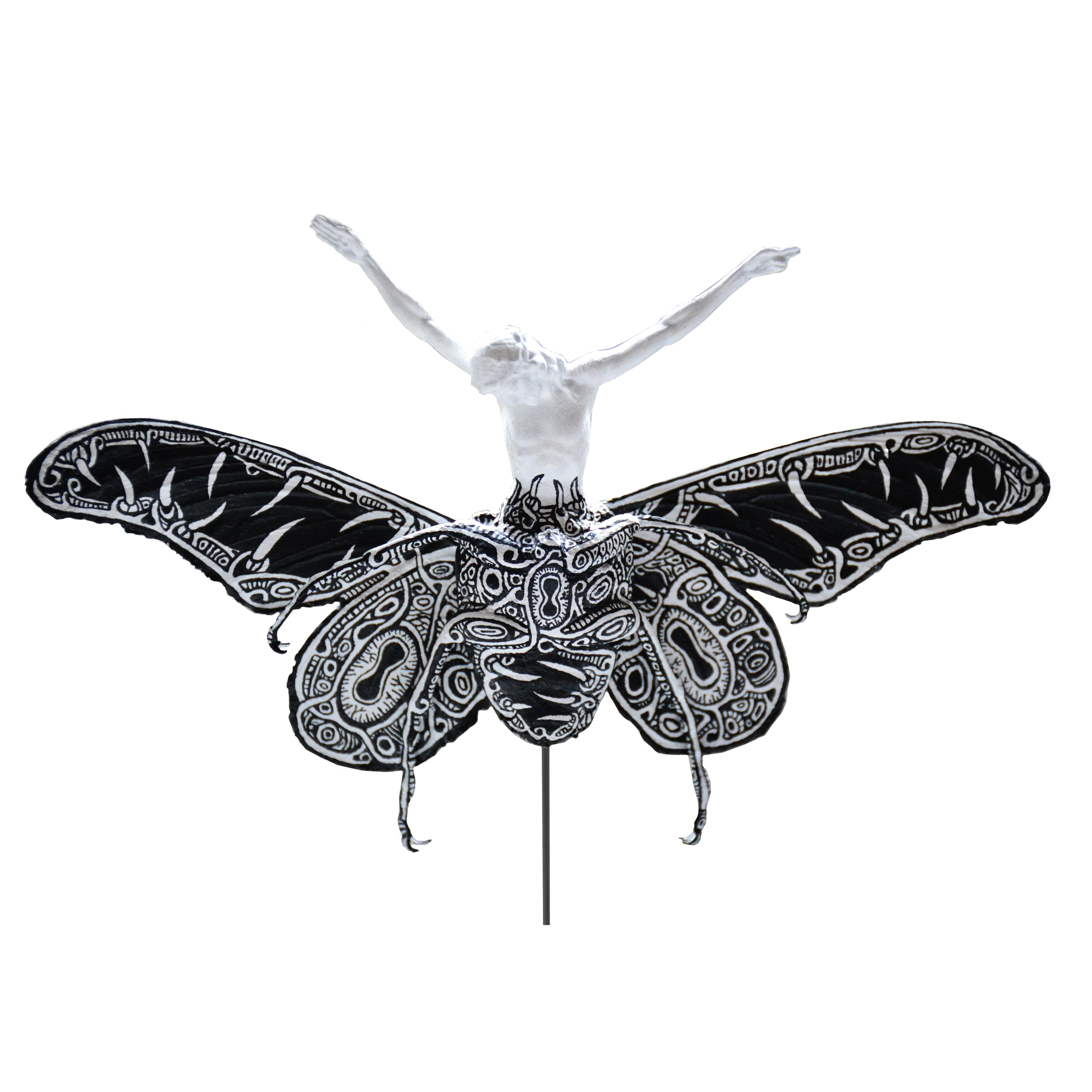 "Christeopteryx III(""Sacred"" Variety)"