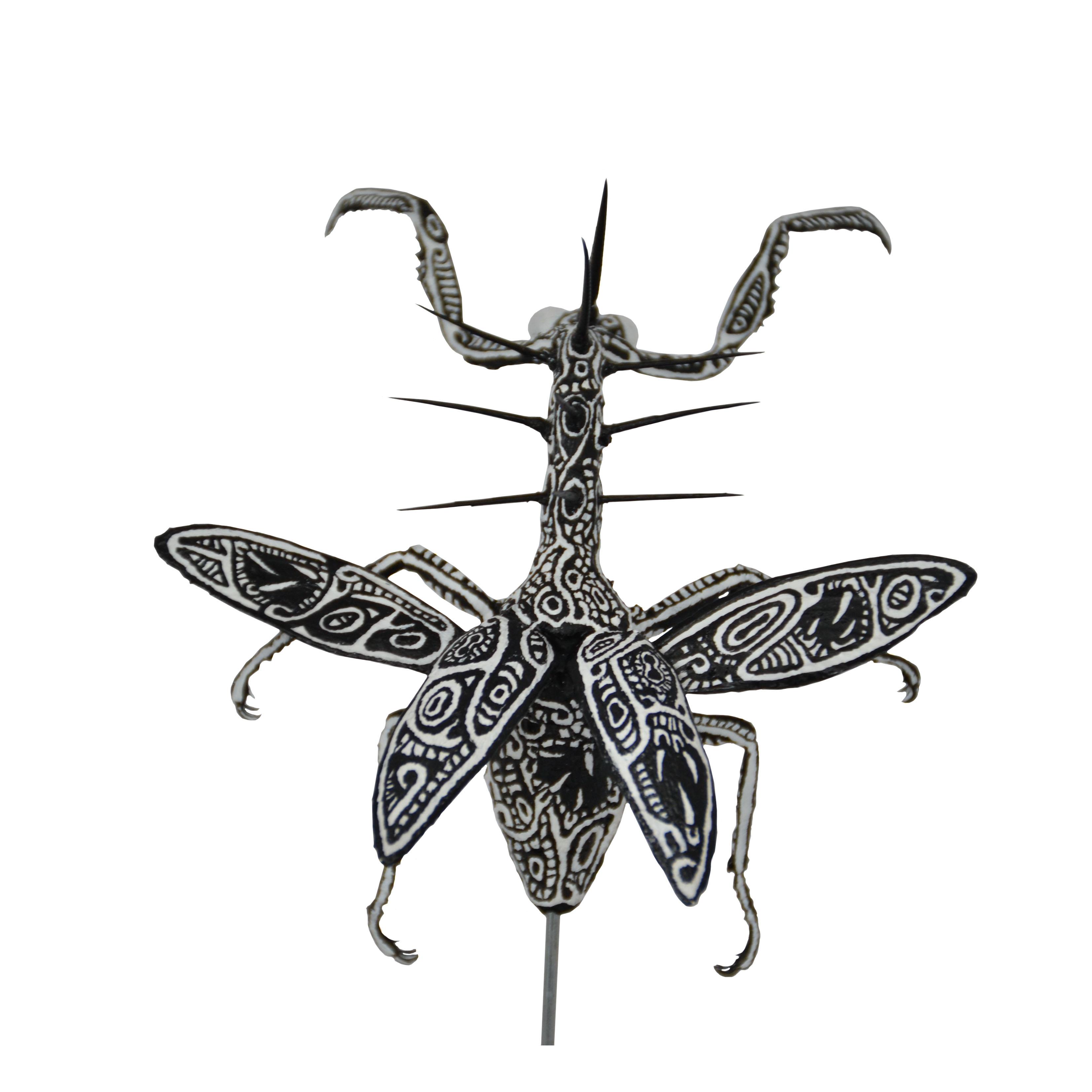 Acromantis Spinactus
