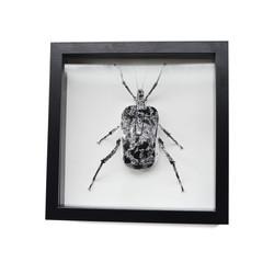 Mouse Bug 6/6 Gen I (UNIQUE PIECE)