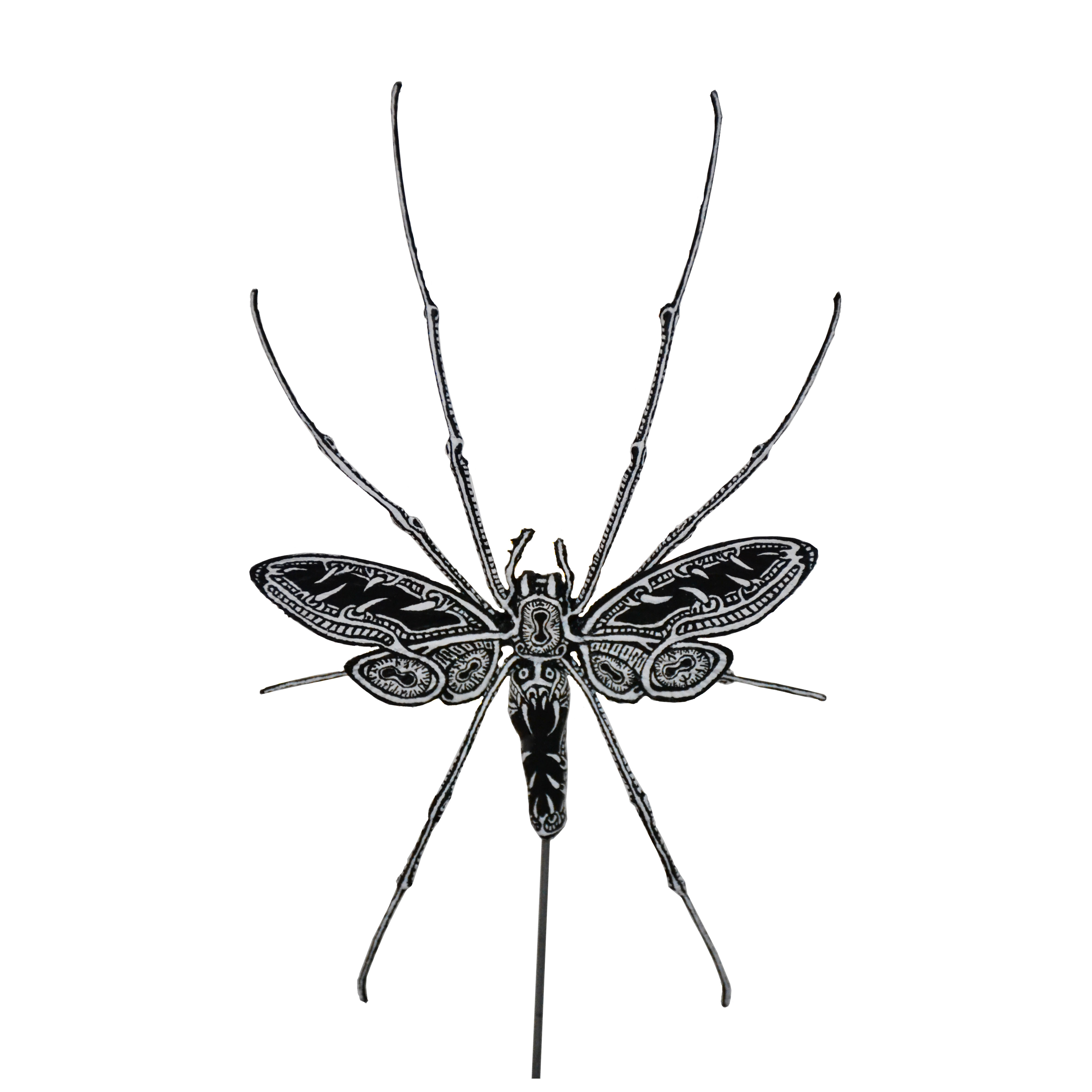 Nephila Cicada