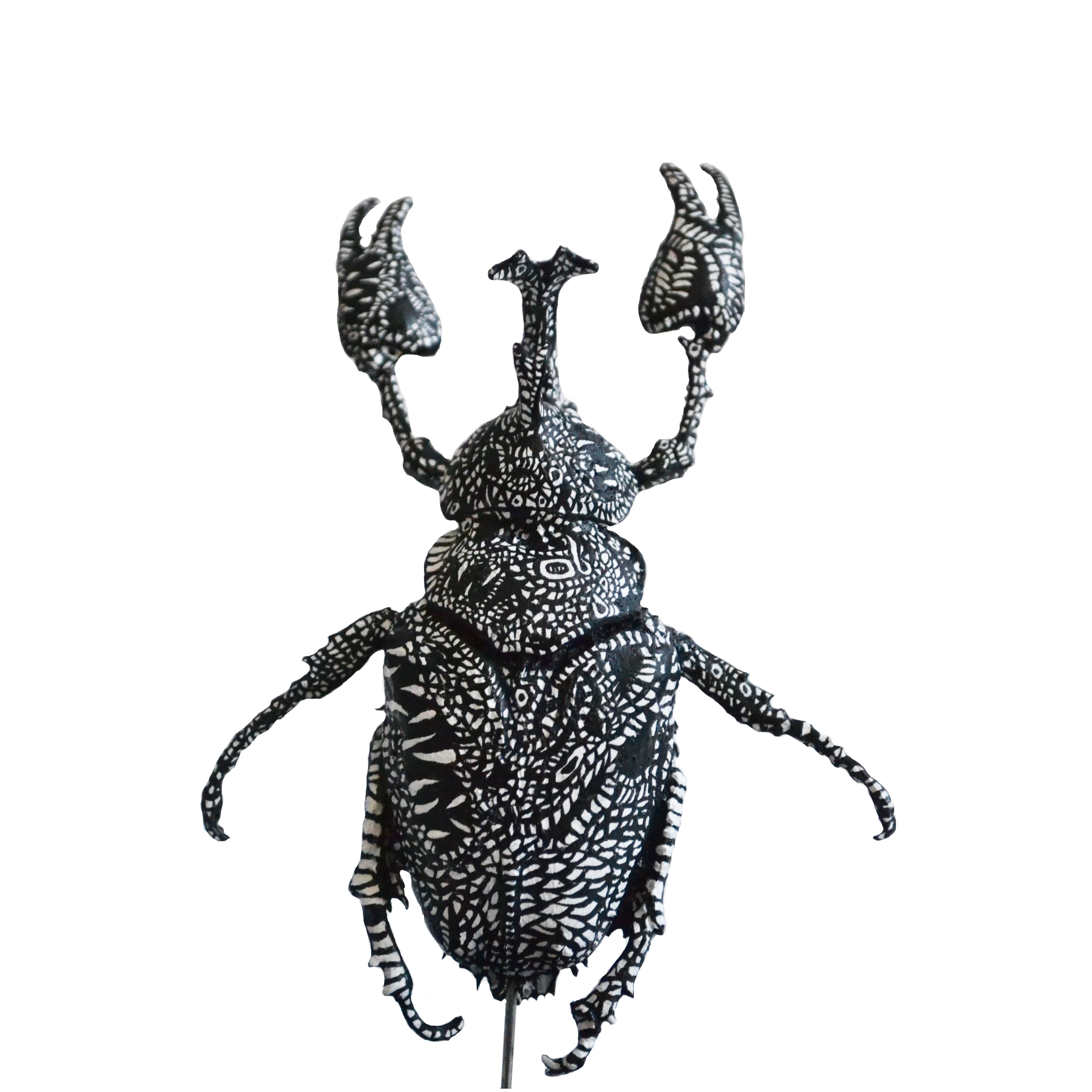 Allomyrina Aranea