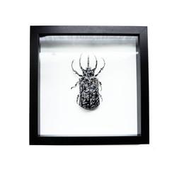 Mouse Bug 4/6 Gen I (UNIQUE PIECE)