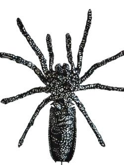 Acrocinus Spinicrus
