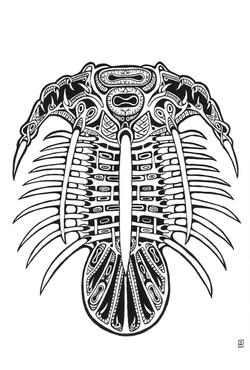 Kolihapeltis Pengo - Trilobita II
