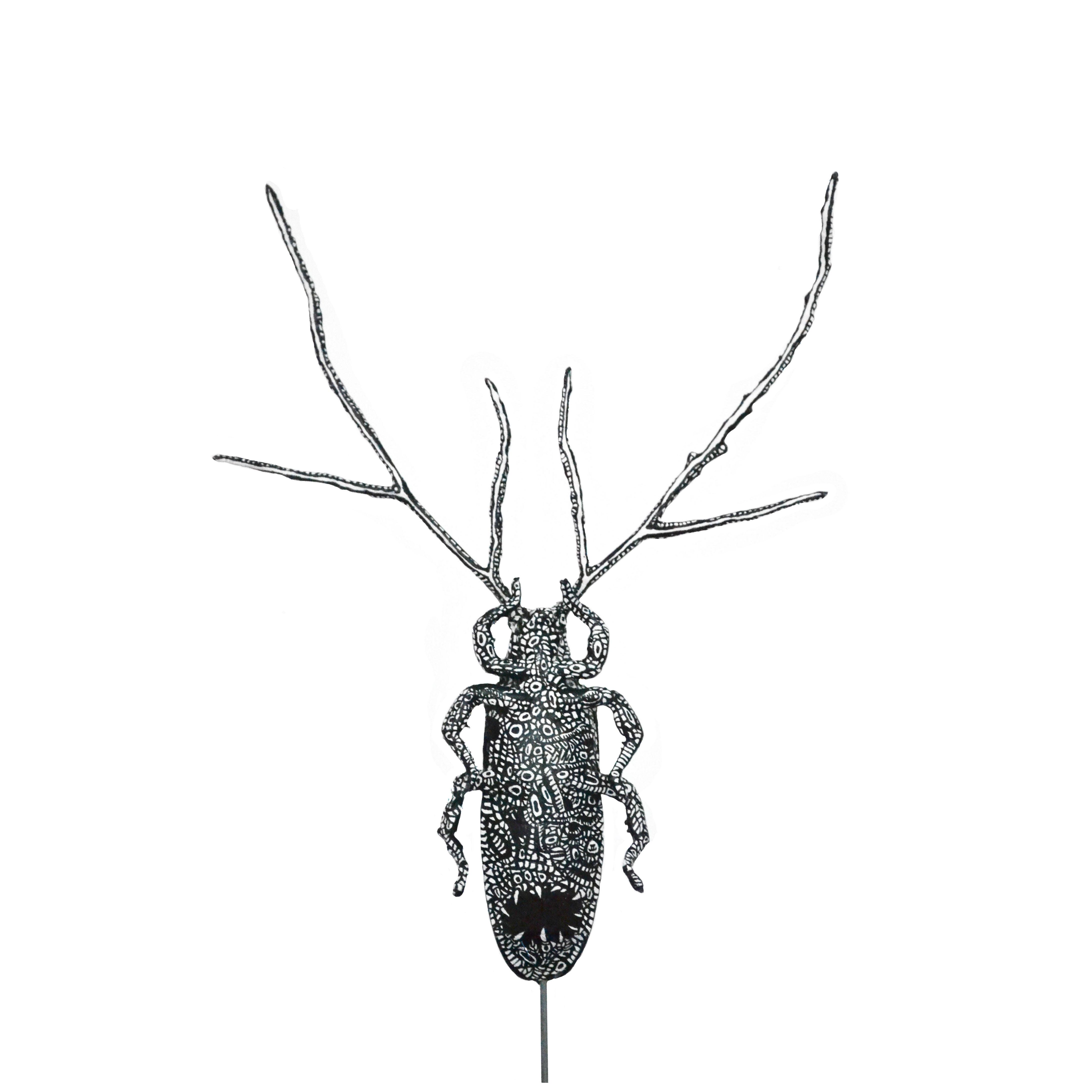 Xylocera Assamensis