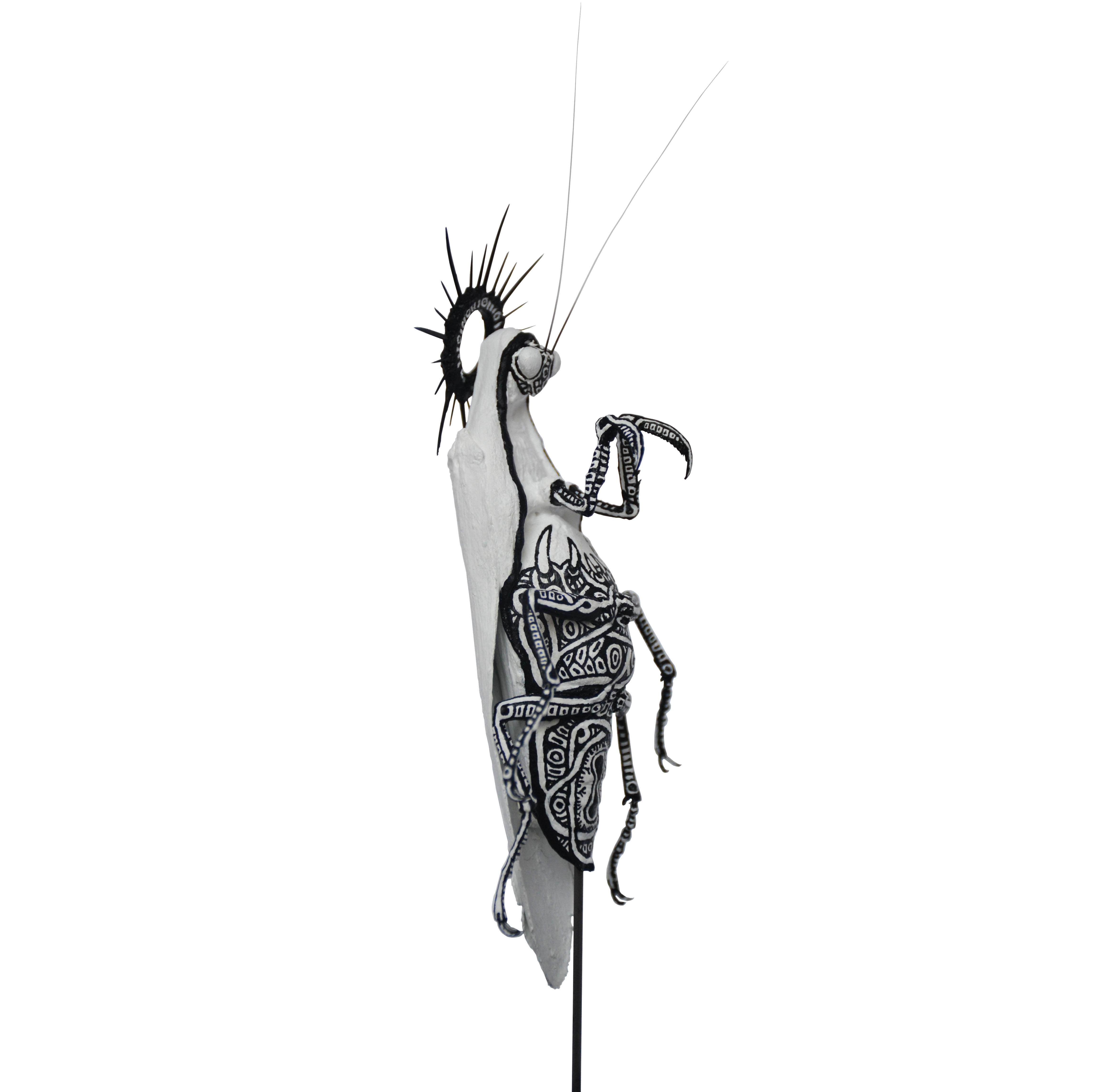 """Ave Mantis (""""Sacred"""" Variety)"""