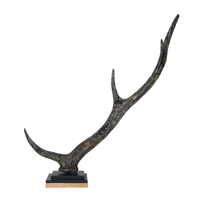 Cervus Elaphus Horn (European Deer)